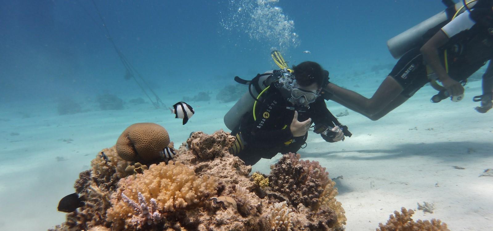 diving odyssea plongée